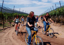 Wine tours and Spanish in Mendoza