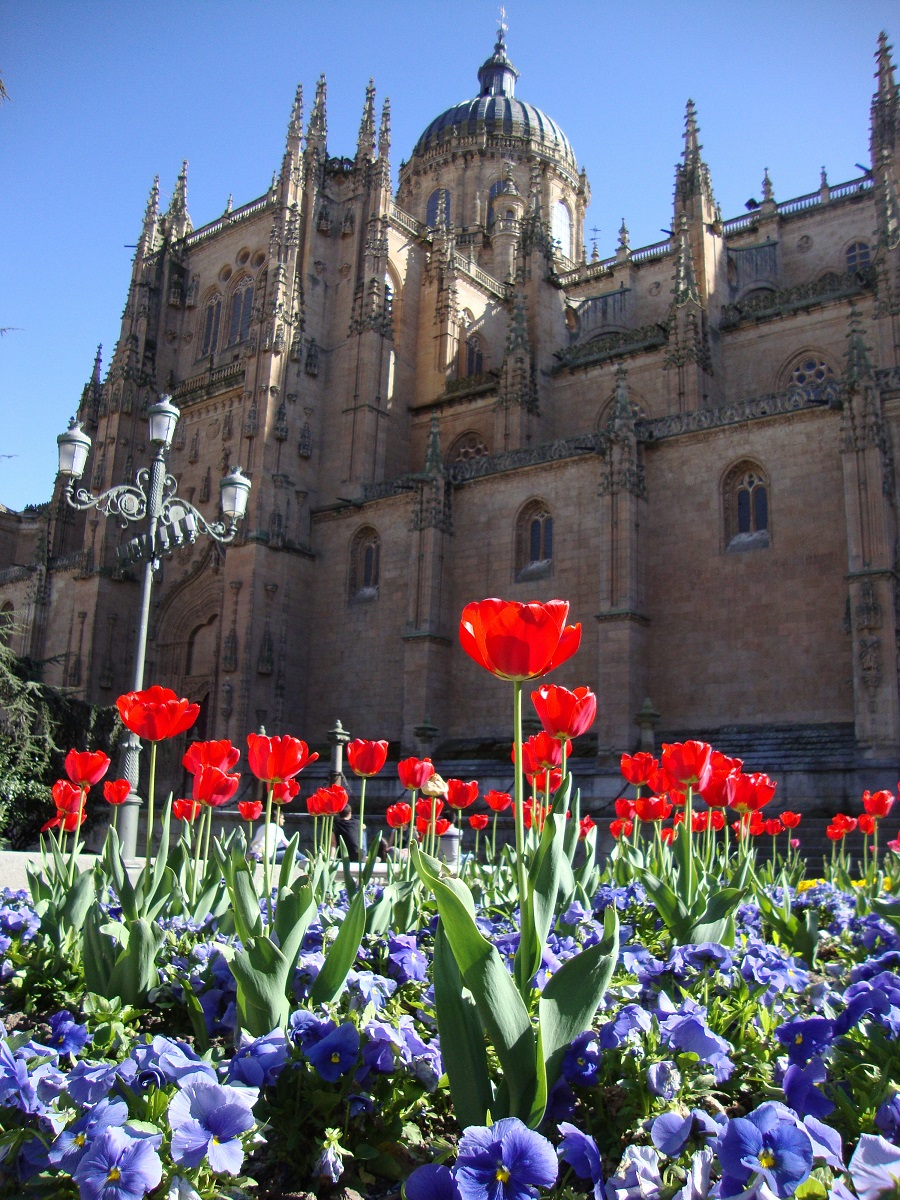 Study Spanish in Salamanca